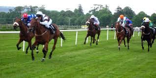 race horses2
