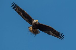 Eagle_gallery16
