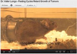 souris qui a jeûné avant la chimiothérapie
