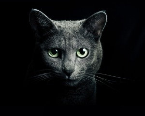 eye_of_russian_blue_cat_hq