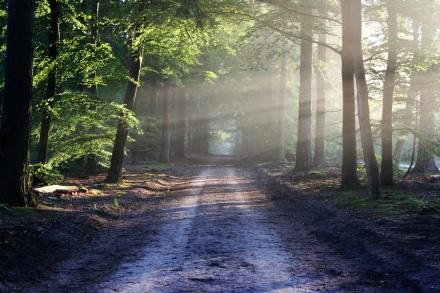 road-sun-rays-path
