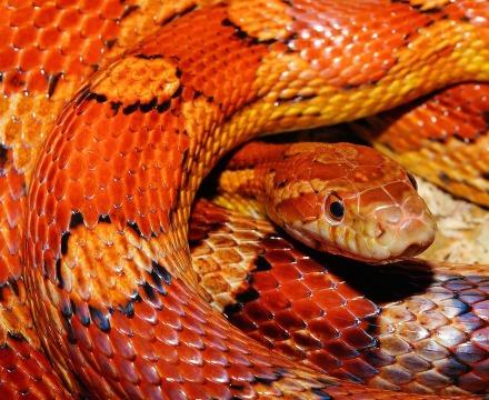 snake-579682_960_720